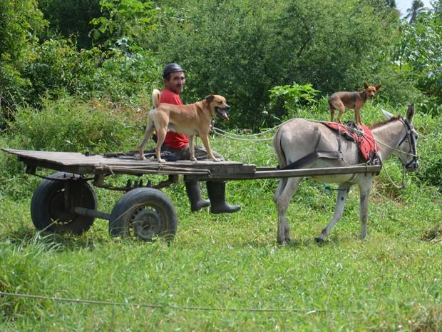 """Um cachorro foi flagrado """"pegando uma carona"""" em um jumento que carregava a carroça de seu dono, Egeude Gomes Quirino, que contou que seu animal de estimação gosta de andar em cima do animal de carga. """"Ele dificilmente cai"""", disse o dono. O fato inusitado aconteceu nas margens da BR-230, em João Pessoa, na tarde desta segunda-feira (26). (Foto: Walter Paparazzo/G1)"""