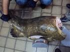 370 quilos de peixes são apreendidos na Paraíba