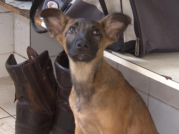 Cachorro fica trancado em carro e é resgatado pelo Corpo de Bombeiros (Foto: Imagens / TV Bahia)