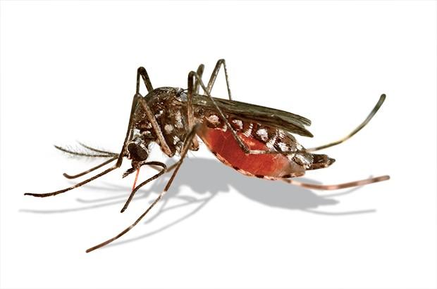 Vírus chikungunya: um risco maior que o ebola