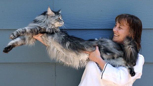 Foto de 2009 mostra o gato Stewie, considerado o mais longo do mundo, com sua dona, Robin Hendrickson (Foto: Andy Barron/AP)