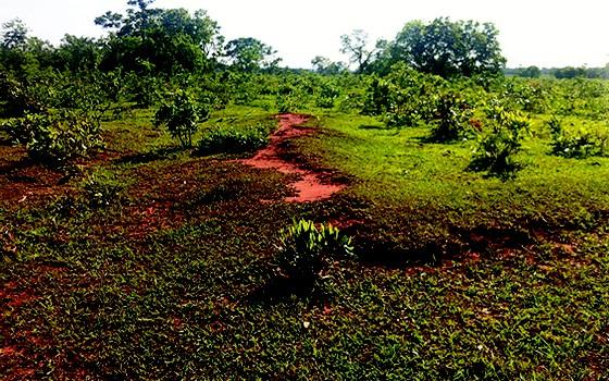 pasto degradado (Foto: Alex Melotto/Divulgação)