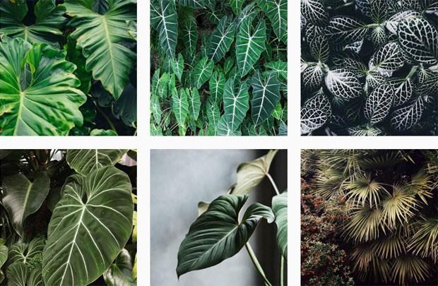 10 perfis no Instagram que todo aficionado por plantas precisa conhecer (Foto: reprodução)