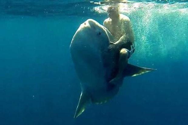 Turista montou em peixe-lua no México (Foto: Reprodução/YouTube/Matt G)