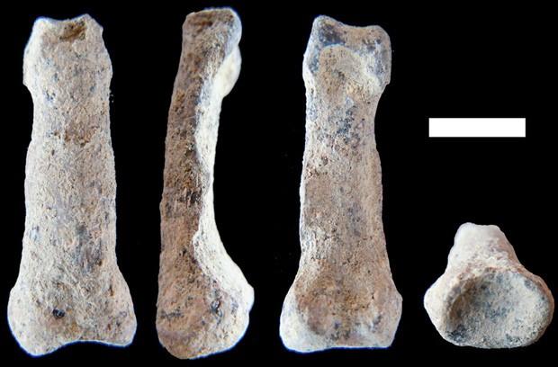 Osso da mão moderna encontrado na África visto em quatro ângulos diferentes: risco branco corresponde a 1 cm   (Foto: M. Domínguez-Rodrigo)