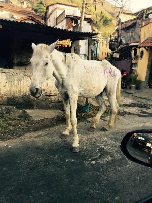 Foto de cavalo abandonado mobiliza moradores de Petrópolis (Foto: Arquivo Pessoal)