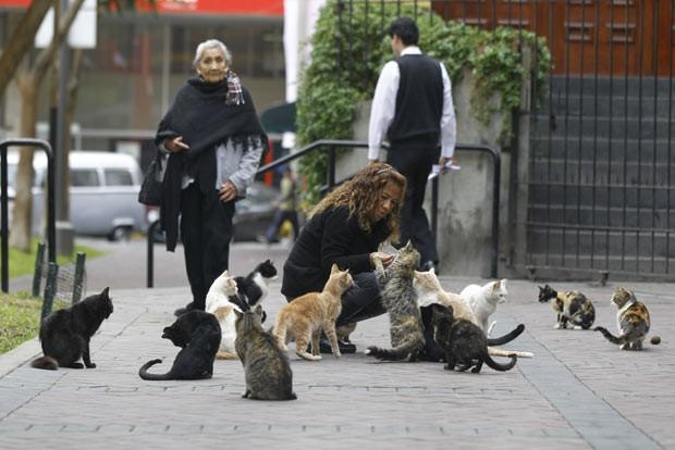 Gatos são alimentados nesta quinta-feira (2) em praça de Lima, no Peru (Foto: Martin Mejia/AP)