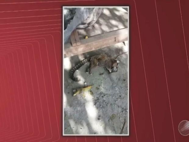 Macacos foram achados mortos com sinais de espancamento (Foto: Reprodução/ TV Bahia)