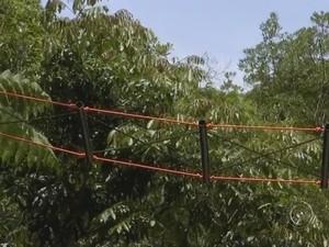 Passagem entre árvores permite travessia de animais fora da pista (Foto: Reprodução/ TV TEM)