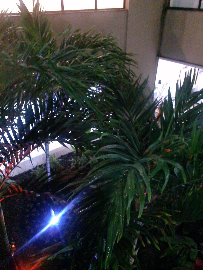 Em ambientes de baixa iluminação a qualidade caí, porém ainda é uma boa câmera de tablet (Foto: Laura Rezende /TechTudo)