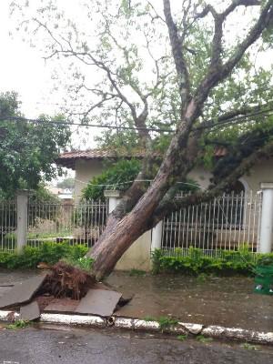 Árvores caíram em Cianorte (Foto: Luiz Carlos Carvalho / RPC)