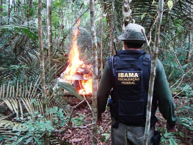 Operação apreendeu oito mil metros cúbicos de madeira ilegal. (Foto: Divulgação/ Ibama)