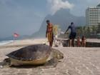 Tartaruga é encontrada morta na praia de São Conrado