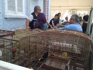 Polícia acha que as aves eram usadas em rinhas (Foto: Walter Paparazzo/G1)
