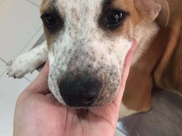 ONGs cães e gatos campinas (Foto: Aline Oliveira)