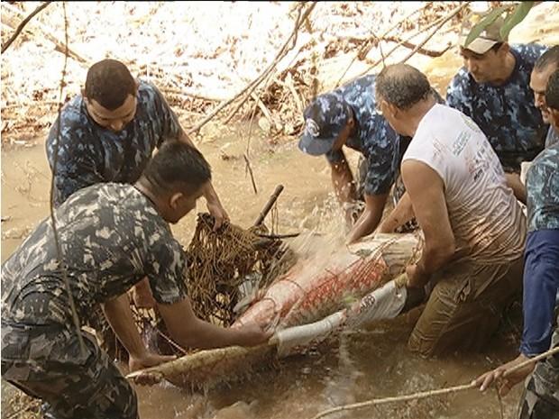Peixe gigante ficou preso em uma parte rasa do lago do Parque Cesamar, em Palmas (Foto: Reprodução/TV Anhanguera)