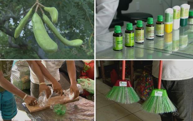 Bioindústrias do Amapá (Foto: Reprodução/TV Amapá)