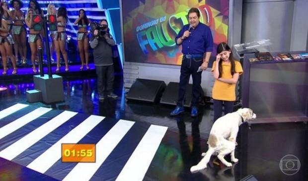Cachorro faz cocô no palco do Domingão do Faustão (Foto: Reprodução/Globo)