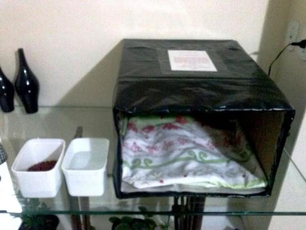 Caixas de papelão são forradas com lona e cobertor (Foto: Claudia Lousada/ Arquivo Pessoal)
