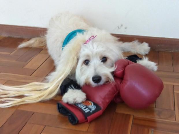 Pérola Carolline com uma luva de boxe. (Foto: Alex Araújo/G1)