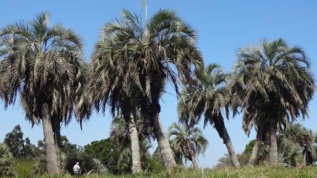 Floresta ocupava grandes extensões no estado há milhares de anos (Foto: Maria Maurente/RBS TV)