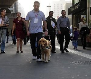 George treinando a golden retriever Pucca na Avenida Paulista, em São Paulo (Foto: Reprodução / Facebook)
