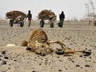Entenda a seca no Chifre da África