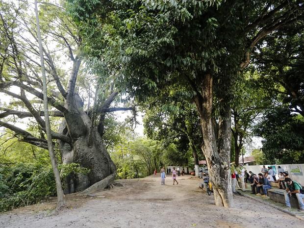 Jardim do Baobá (Foto: Andrea Rego Barros/PCR)