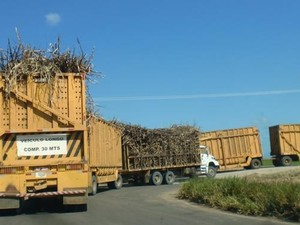 Caminhões transportam toneladas de cana cortadas (Foto: Lúcio Verçoza/Arquivo Pessoal)