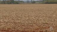 Chuva anima produtores do sul do estado para o plantio da nova safra de soja