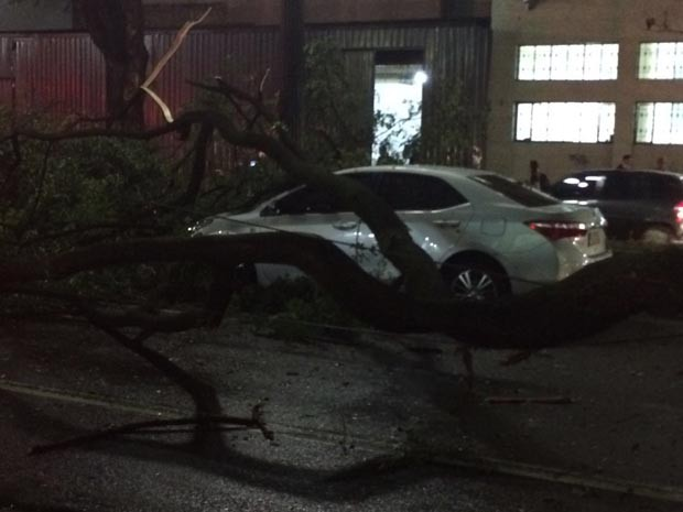 Carro foi atingido por árvore no Centro de SP (Foto: Roney Domingos/G1)
