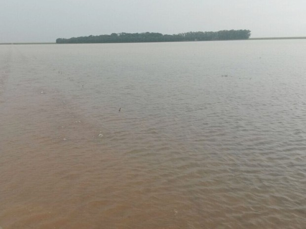 Chuva causou prejuízo e alagpu plantações em Campo Novo do Parecis (MT) (Foto: Giovana Velke/Sindicato Rural de Campo Novo do Parecis)