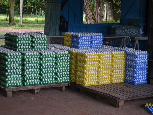 Mais de 6 mil ovos foram apreendidos, recolhidos e descartados na operação da Adepará  (Foto: Dominique Cavaleiro/G1)