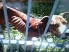 Mulher é multada em R$ 9 mil por maus-tratos a cães em Suzano