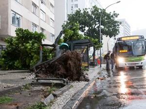 Árvore caiu na Praia de Botafogo, próximo ao Botafogo Praia Shopping, e quase atingiu um ponto de ônibus. Um telefone público foi danificado com a queda, mas ninguém foi atingido.  (Foto: ERBS JR./Estadão Conteúdo)