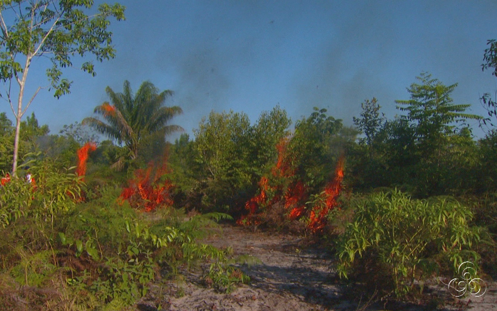 Pesquisa estuda emissão de gases de desmatamento na região (Foto: Jornal do Amazonas)