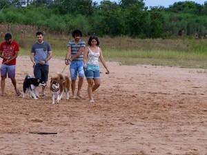 Moradores de Palmas criam grupos para trocar experiências sobre a raça husky siberiano (Foto: Reprodução/TV Anhanguera)