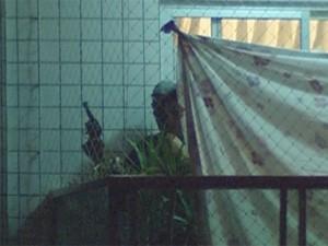 Sequetrador ameaça refém em BH (Foto: Reprodução/TV Globo)