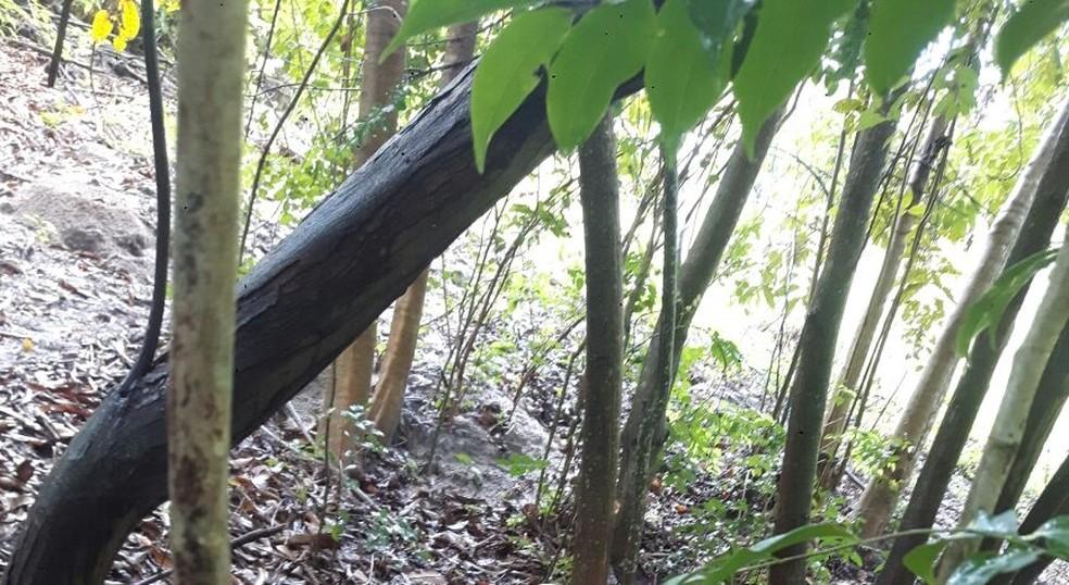 Corpos das duas jovens foram encontrados em uma área de mata fechada, às margens do rio Pitimbu, em Nova Parnamirim (Foto: PM/Divulgação)
