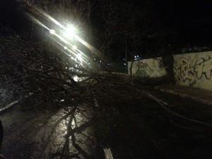 Árvore que ficava dentro de um mercado atacadista caiu e deixou parte de avenida interditada (Foto: Náyra Macêdo)