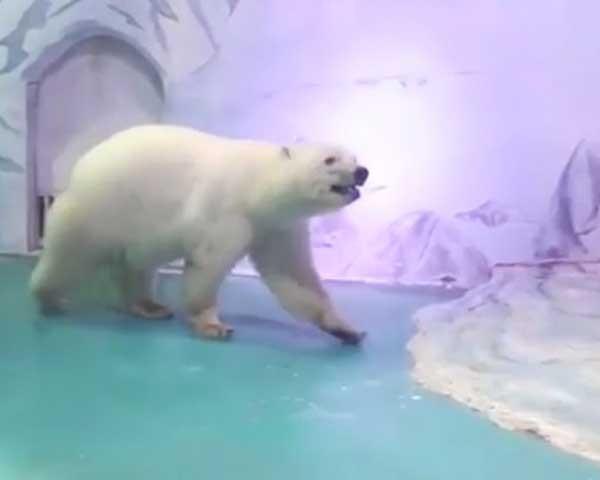 Pizza, o urso polar mais triste do mundo (Foto: Reprodução)