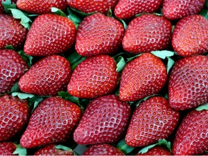 Sucesso do morango de Atibaia é fruto de um trabalho iniciado há décadas (Foto: Festa de Flores e Morangos de Atibaia)