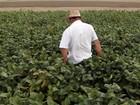 Indústrias de soja reduzem previsão para colheita no Brasil, diz associação