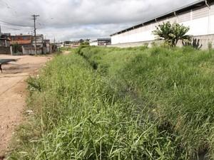 Córrego antes das obras (Foto: Guilherme Berti / PMMC)