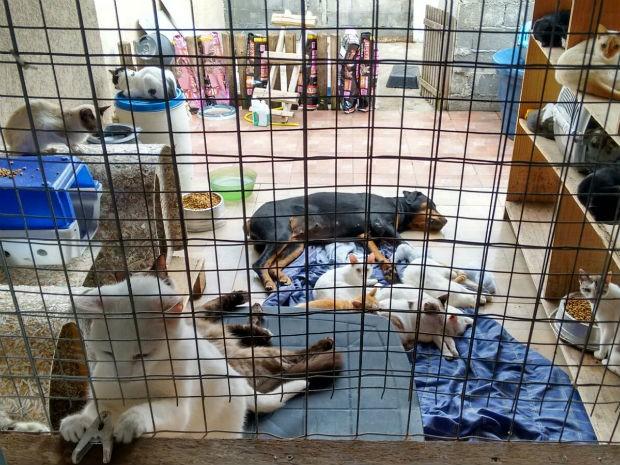 Área construída especialmente para abrigar cães e gatos (Foto: Valéria Bianchi/SOS Animais Abandonados)