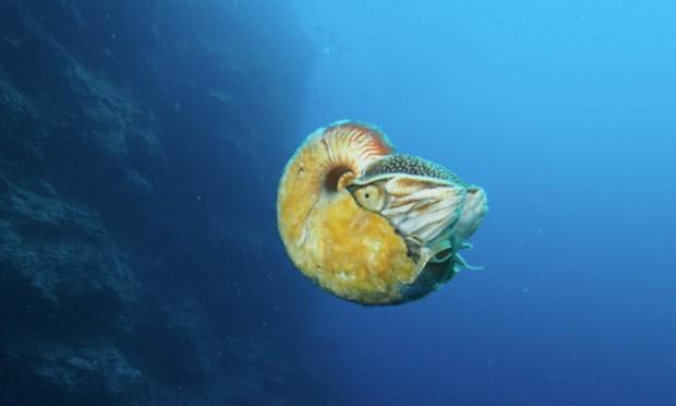 Pesquisador redescobre criatura marinha que não era vista havia mais de 30 anos (Foto: Reprodução/Facebook/University of Washington)