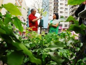 Programação especial para comemorar o Dia da Árvore (Foto: Divulgação/ Prefeitura de Sorocaba)