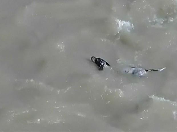Cão caiu no rio Chili e foi levado pela correnteza por alguns metros (Foto: BBC)