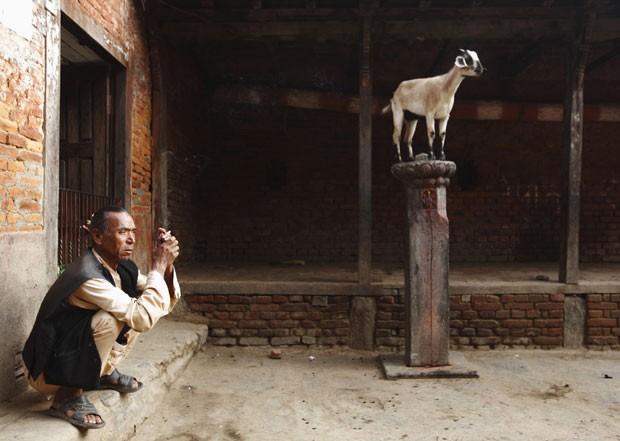 Cabra 'vigia' entrada de templo no Nepal (Foto: Navesh Chitrakar/Reuters)