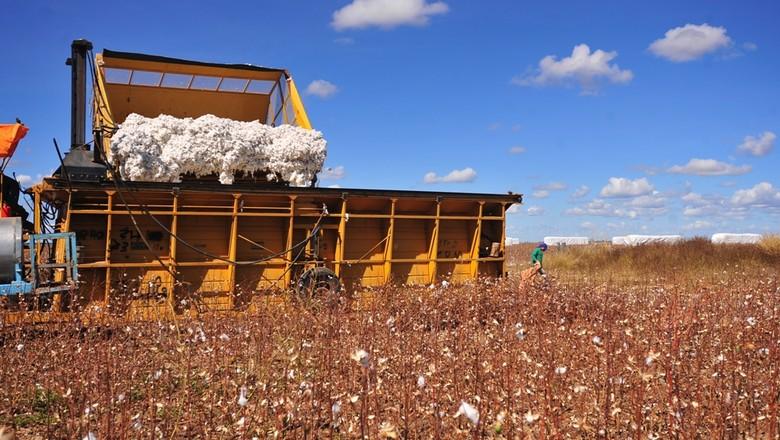agricultura_algodao_ (Foto: Ernesto de Souza/Ed. Globo)